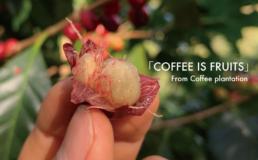 「 COFFEE IS FRUITS 」コーヒーはフルーツです
