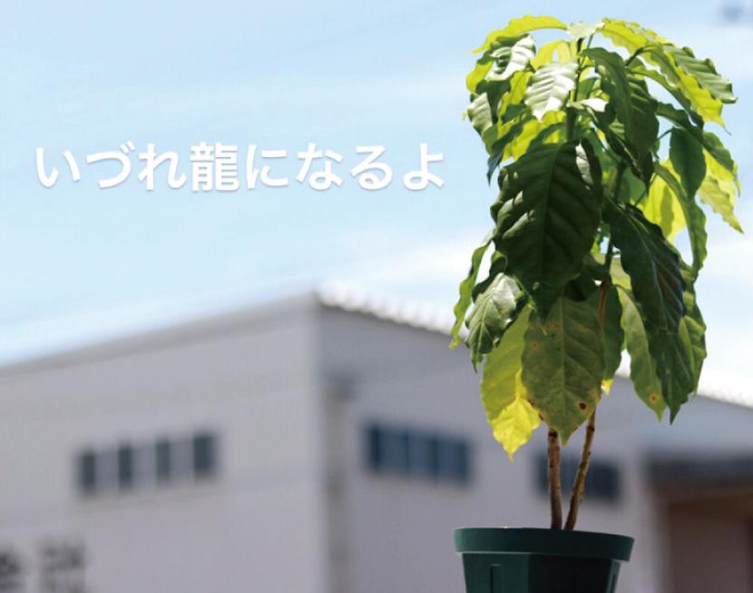 Green × Coffee,傍にCOFFEEを