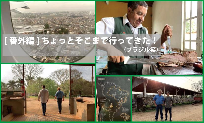 ブラジル,コーヒー農園,コーヒー
